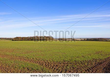Wheat Crop And Wind Turbine