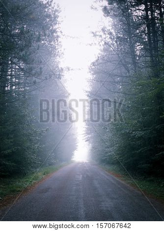 Single point perspective down fog obscured, forest-lined road.   Warm moisture into cooler morning air.  Fog rises all around in a wooded roadway.  Deciduous Eastern Ontario forest lake.