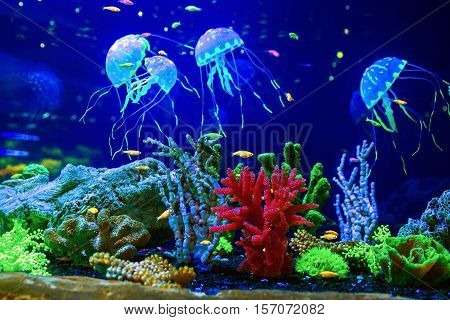 Beautiful jellyfish, medusa in the neon light with the fishes