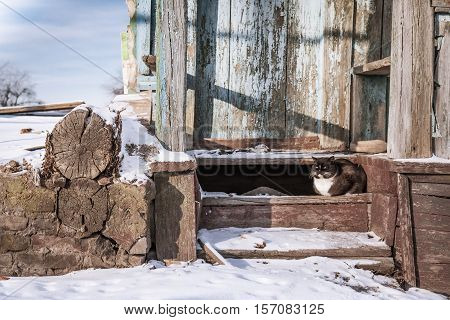 Abandoned house with domestic cat in winter day