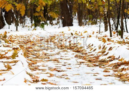 Fallen yellow and orange  leaves covered with snow lying on the ground. Yellow  leaf. Autumn leaf fall. Freezing rain. Leaves and tree branches on snow.
