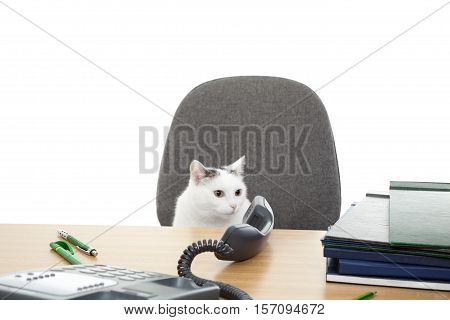 cat sits near desk and speaks through telephone