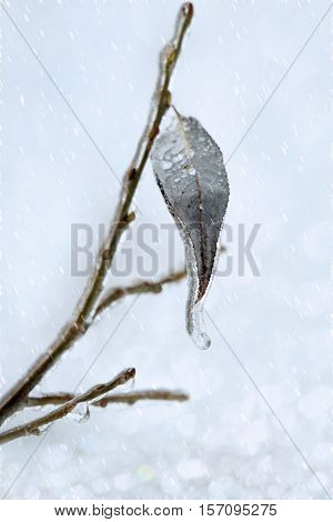 Leaf with an icicle on branch under a sleet