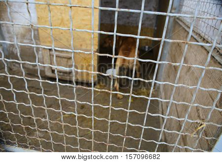 Abandoned dog in the kennel, homeless dog behind bars in an animal shelter.Dog behind the fence looking out through the wire of his cage.