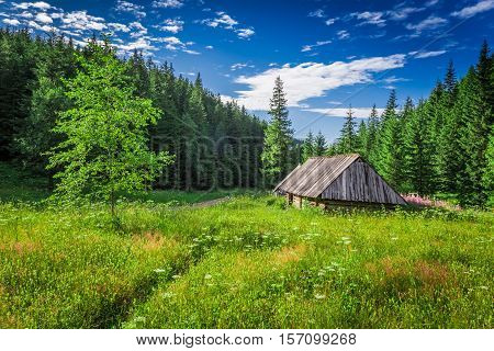Valley In The Tatra Mountains At Summer