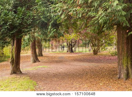 Two girls under the autumn canopy of trees