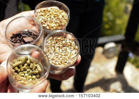 Cebada, Lúpula y otros granos para hacer cerveza artesanal