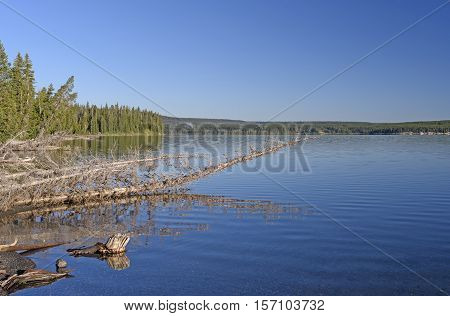Early Morning on a Shoshone Lake in Yelllowstone National Park in Wyoming