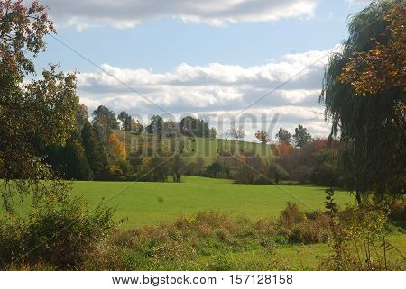 Early New England Fall Day depicting sunny blue skies, green tree starting to turn, green pasture and Angus cattle in the distance.  The companion photo to this is taken in early December showing a distinctly different  scene.