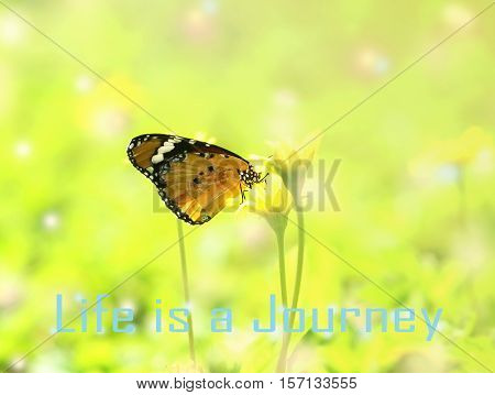Life is a journey - motivational quote beautiful butterfly absorb some sweet from flowers in sunny day