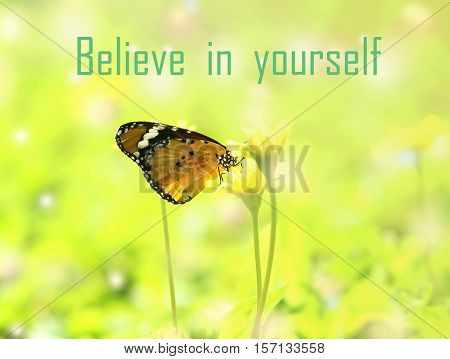 Believe in yourself - motivational quote beautiful butterfly absorb some sweet from flowers in sunny day