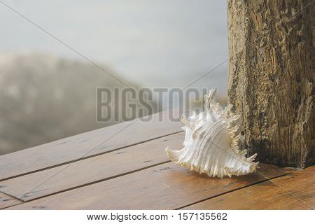 Sea shells on wooden table with sea background
