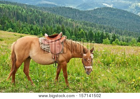 Horse grazing on a summer mountain pasture