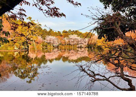 Ryoanji Gardens, Kyoto