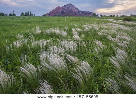 Steppe Of Feather Grass