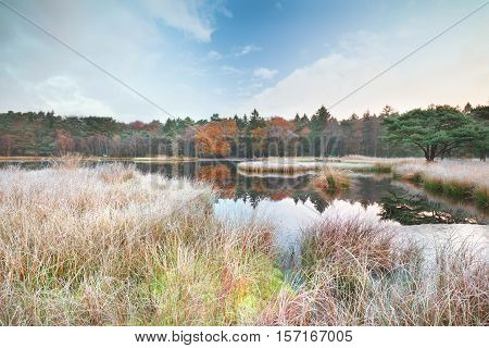 frosty morning on lake in autumn Drenthe Netherlands