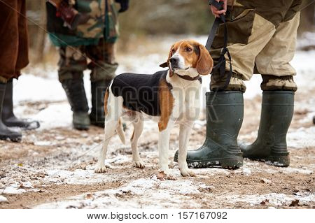 Hunting dog with hunters in forest. Winter hunting.