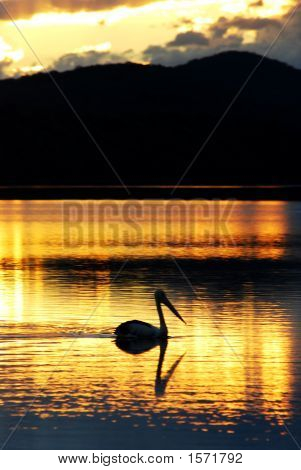 A beautiful sunset with a pelican on a lake poster