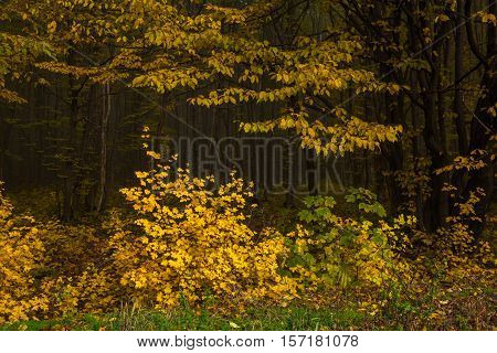 The edge of an autumn forest with yellow leaves