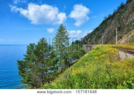 Coniferous trees on shore of lake near Circum-Baikal Railway. Irkutsk region. Russia