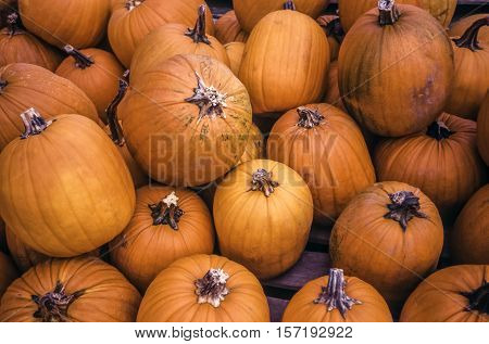A pumpkin is a cultivar of the squash plant most commonly of Cucurbita pepo