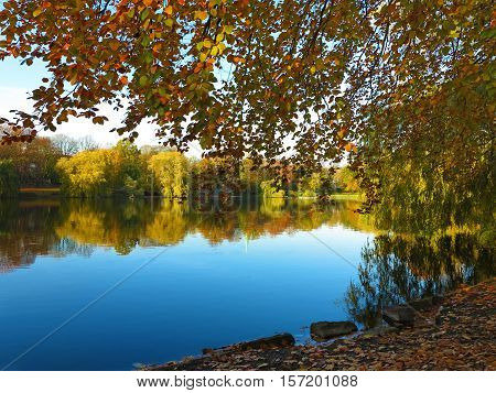 golden autumn leaves an beautiful lake in a park