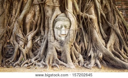 Ayutthaya, Thailand - March 1, 2014: Head of Buddha statue in the tree roots at Wat Mahathat temple in Ayutthaya, Thailand.