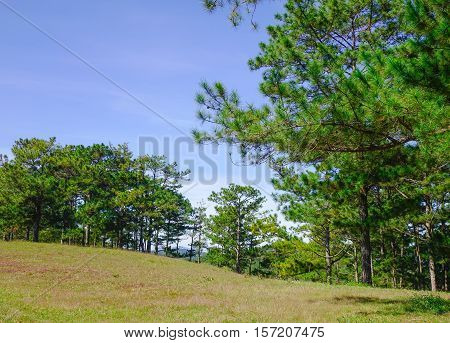 Landscape With Pine Forests In Dalat, Vietnam