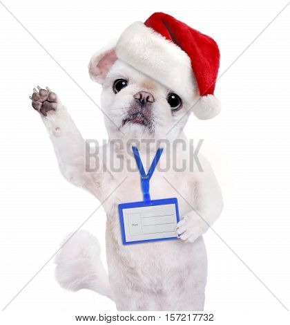 Dog in red Christmas hat wear blank white badge mockup .
