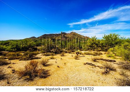 Black Mountain and the Desert Landscape with Cholla Cactus and other Cacti at the Boulders in the desert near Carefree, Arizona, USA
