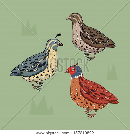 Collection of different type of  quail. California Quail. Blue bird. Brown bird. Bright bird.