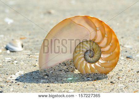 nautilus shell on wet sand