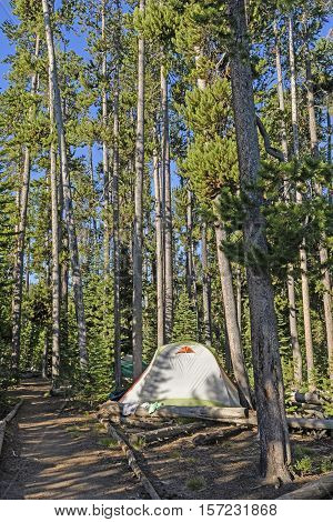 Quiet Campsite in the Pines on Shoshone Lake in Yellowstone National Park in Wyoming.