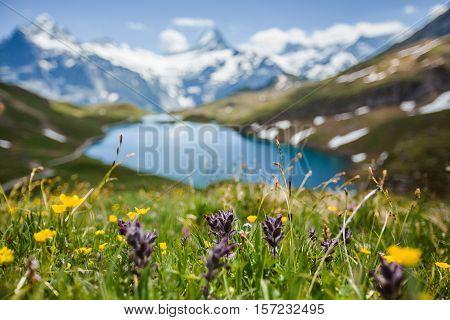 Flowers Near Bachsee, Alps, Switzerland