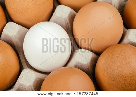 White Egg Surrounded By Brown Eggs. Individuality And Difference Concept.