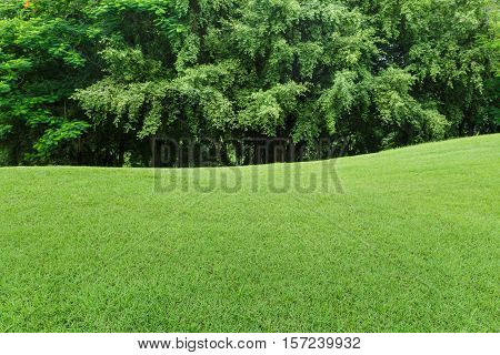 green lawn and tree in the garden