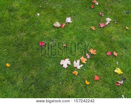 Autumn yellow and red leaves on a green grass