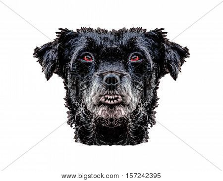 Front view portrait black dog head with diabolic expression isolated on white background