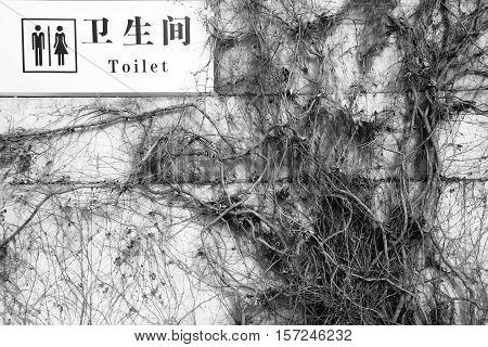 Toilets Words English And Chinese Language Lon White Sign Hanging On Dry Trunks And Branches Of Ivy