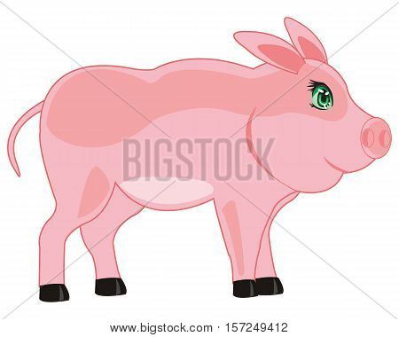 Home animal piglet is insulated on white background