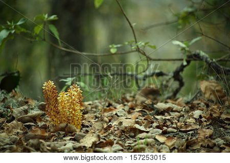 Dry leaves and flowers in the forest, bosque,