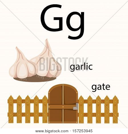 Illustrator of g vocabulary with garlic and gate