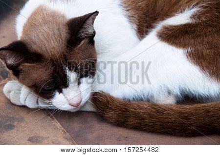 A cat at sleep like lazy on the floor