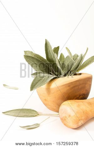 Fresh Sage In  Wooden Mortar With Pestle On Withe Background.