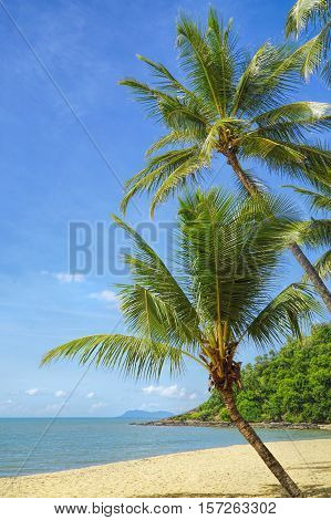 Cairns Australia coconut palms at the beach