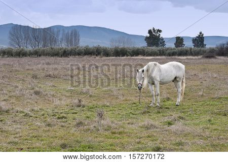 Horse in a rural landscape in Ciudad Real Procince Spain
