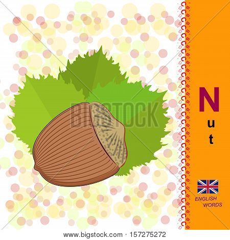 English alphabet. Illustration hazelnuts. Food Vector Image