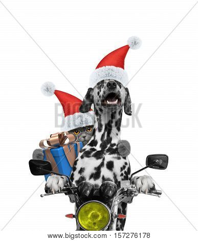 Santa dog and cat with gift ride on a motorcycle -- isolated on white