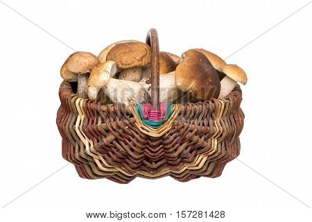 Porcini mushrooms in a basket. Isolated natural