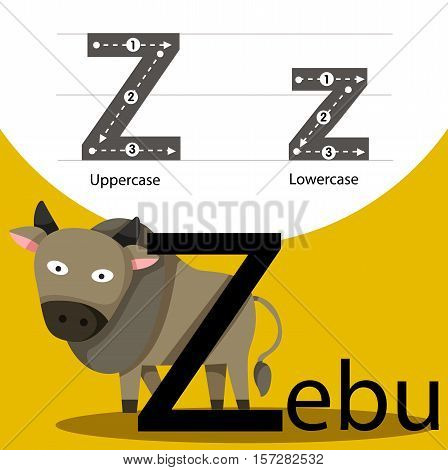 Illustrator of zebu with z font for education